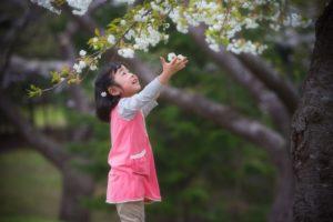 誕生日の桜フォト