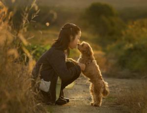 函館近郊駒ケ岳夕暮れ。少女と愛犬フォト