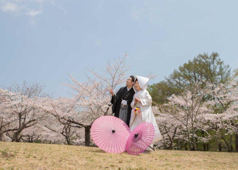 wedding-cherry-B23R4914